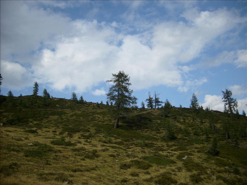 Alpe Alzasca�2009