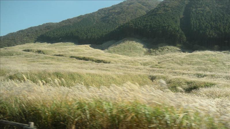 途中的茅草大草原很壯觀