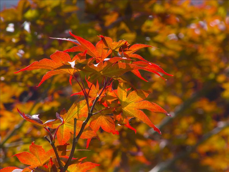 Fire leaves!