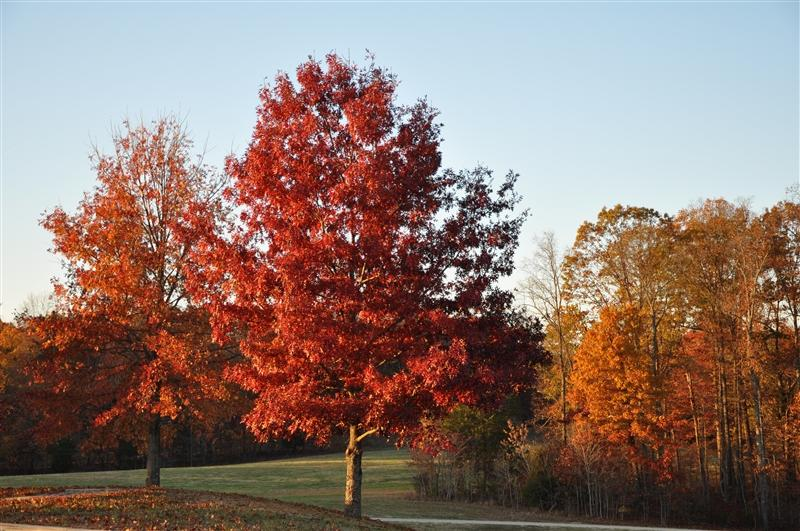 Fall Foilage - Natchez Trace Parkway