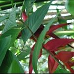 botanic garden4.jpg