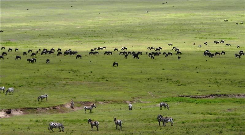 animals•Ngorongoro
