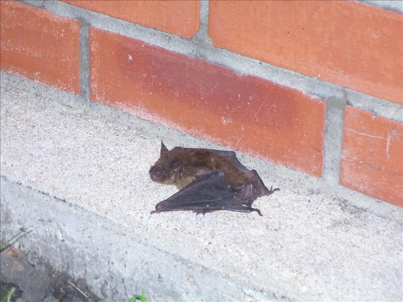 Did this bat escape from mom's batman?
