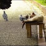 Oji cats