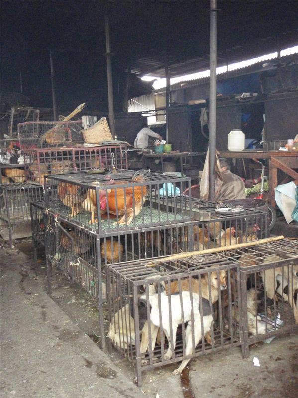 Andi's heartbreak, live animal market, Lijiang