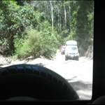 Fraser Island rainforest drive