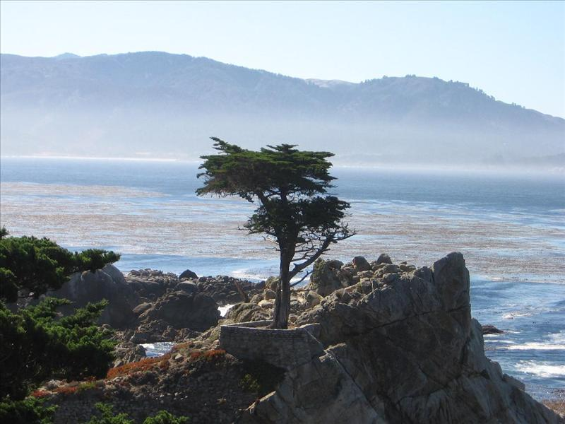 The lonely cypress - 17 mile drive.JPG