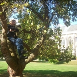 Jess in a tree, in a garden on the oxford campus.