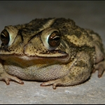 frog 054.jpg