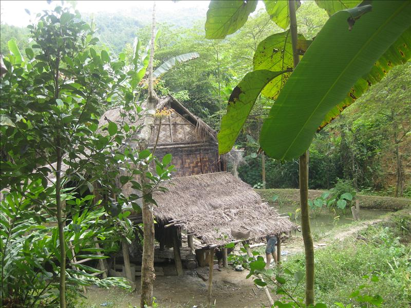 Palm-thatched huts on rice fields