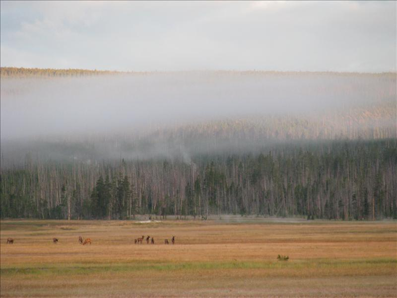 de volgende ochtend weer vroeg opstaan om weer een andere hike te doen met een parkranger. al snel zagen we weer een kudde Elk te zien