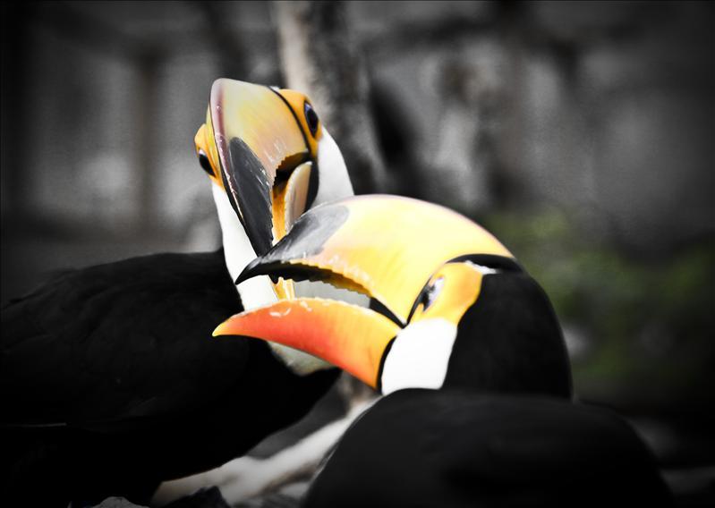 Birds fight!