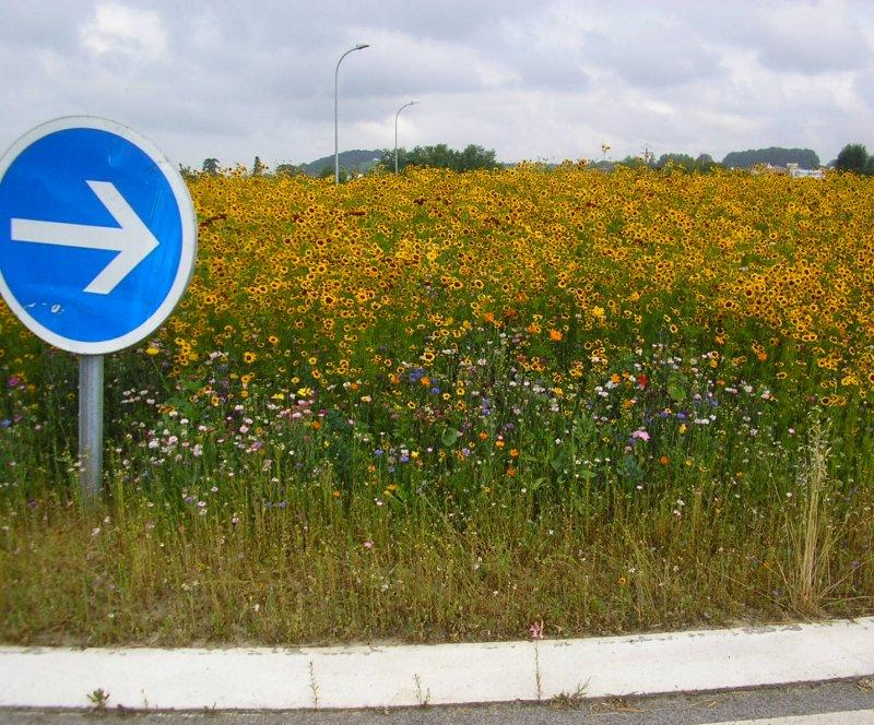 Colourful local rond-point en route to ....