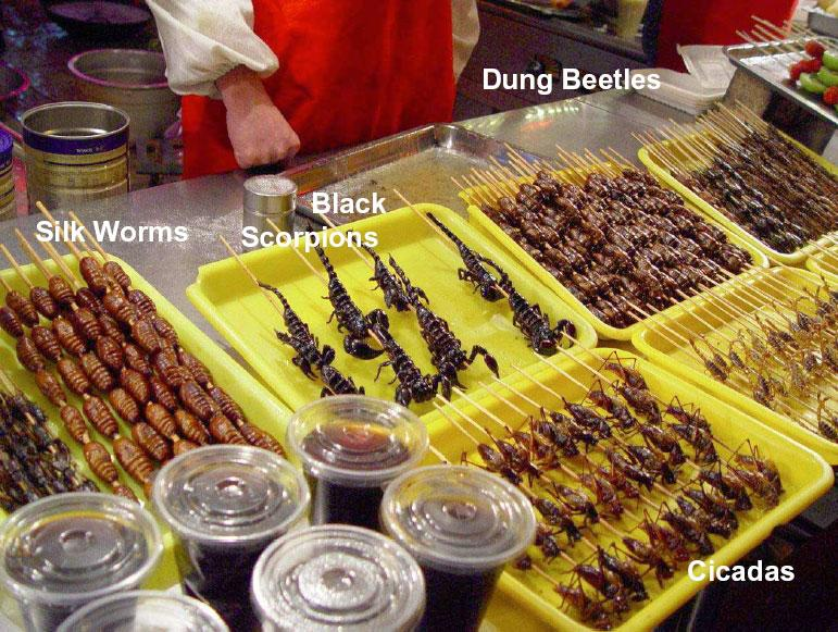 silk worms, black scorpions, dung beetles, cicadas