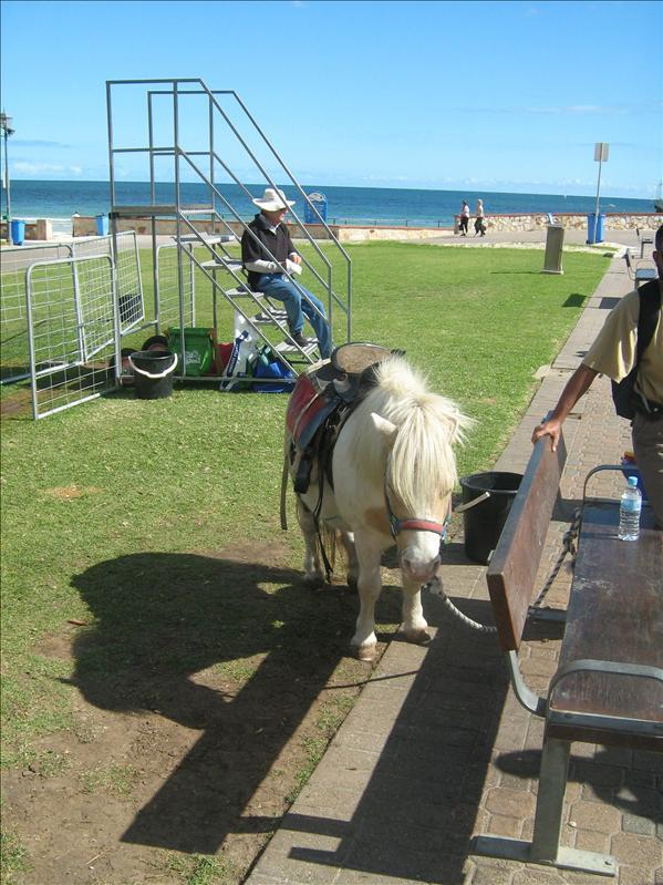 Glenelg - Pony Rides!!