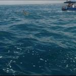 haciendo snorkeling x