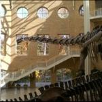 Natural History Museum in Georgia Atlanta
