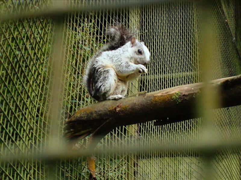 Hilo - Zoo