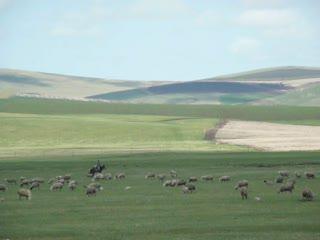 海拉爾騎馬牧羊.MOV