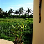 View of rice paddies from the villa I
