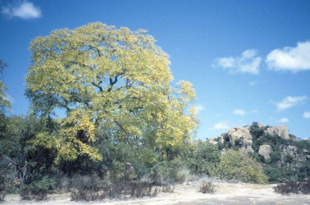 MATOBO NATIONAL PARK, ZIMBABWE - APR