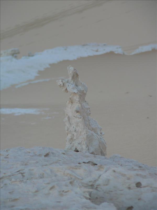 Siwa - Woestijn fossielen