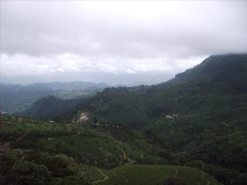 Munnar - South India