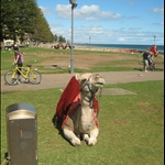 Glenelg - Camel Rides!!
