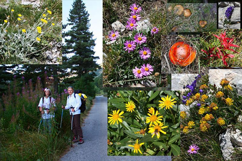 Колаж, илюстриращ растителността в края на лятото. Не е като в началото на лятото, но радва окото.