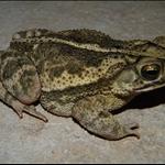 frog 037.jpg