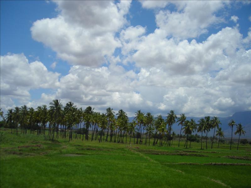 palm trees•Tanzania