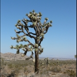 Joshua Tree and Arizona
