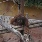 ...som på Borneo