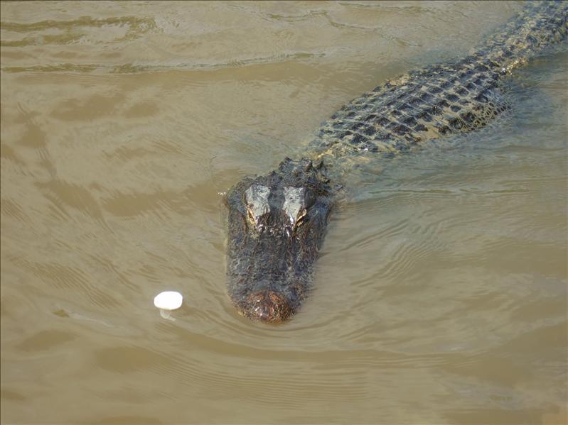 Swamp Tour, New Orleans, Louisiana
