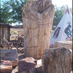 90 pound piece of petrified wood