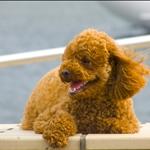 Cute puppy! :)