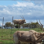 Sept 22 - Werribee Open Range Zoo