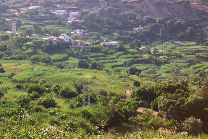terraced cannabis fields of Ouslaf.