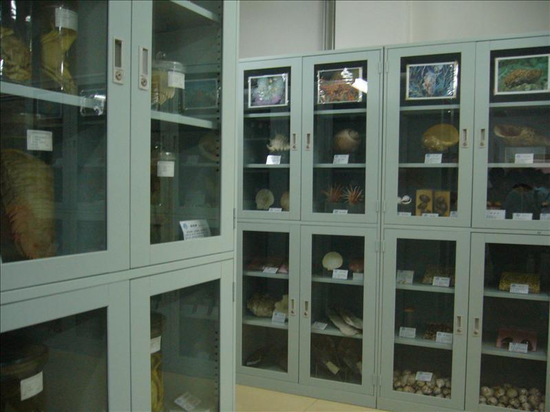 標本館 @ 中國科技研究院海洋研究所