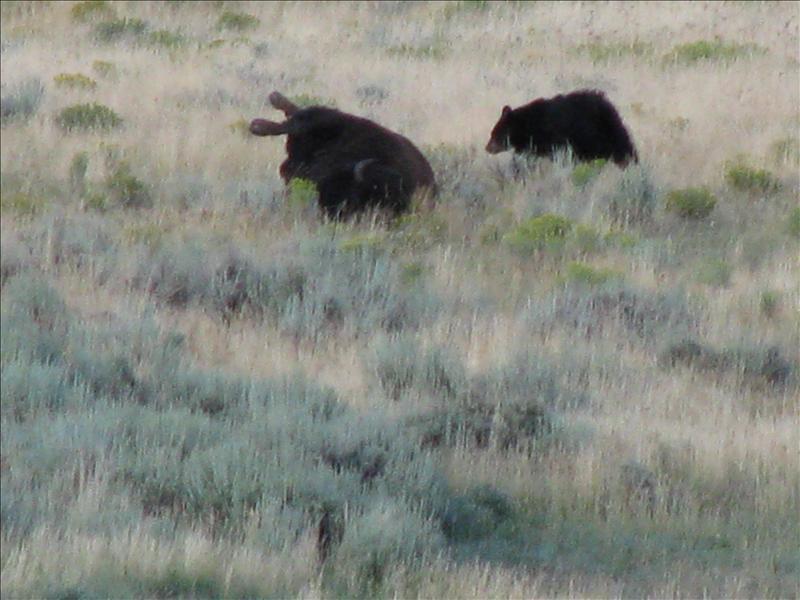 maar uiteindelijk ging er een beer eten