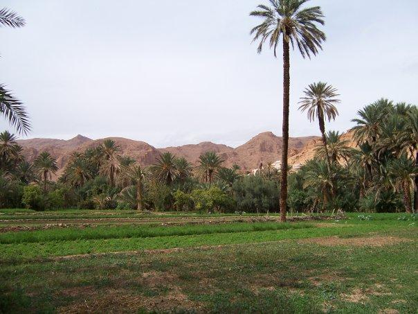 PALMERY, NR TINERHIR, THE HIGH ATLAS