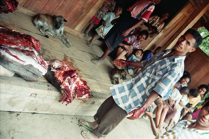they have just butchered a buffalo