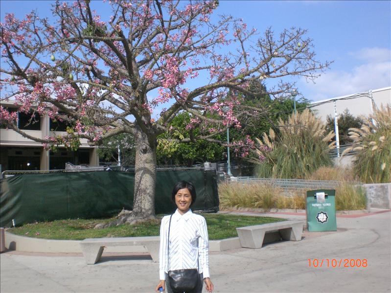 校园里的树