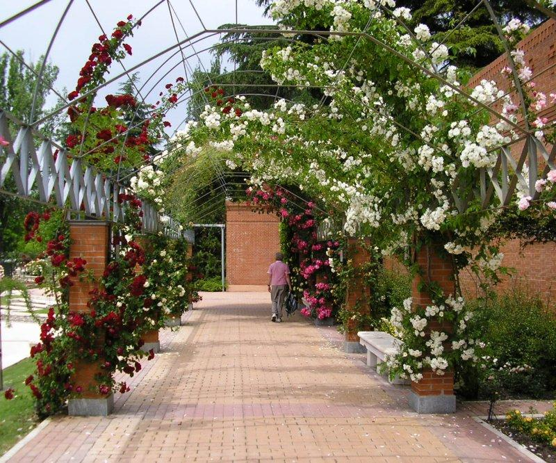 .. in the rose garden.....