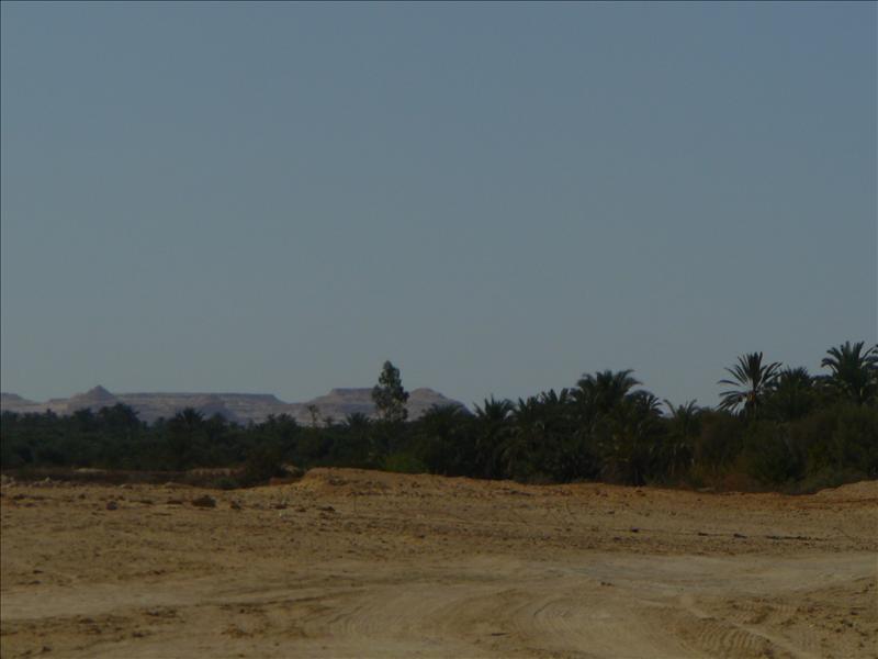 Siwa - Woestijn 4