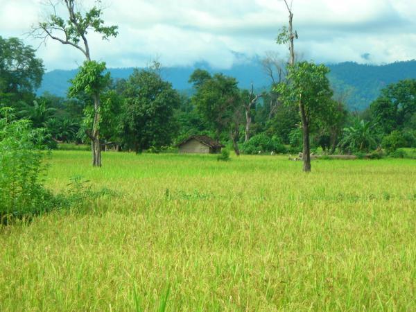 Kamiaya Village