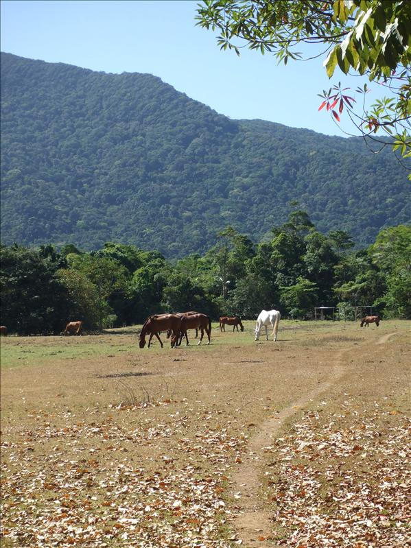 A field, Cape Tribulation