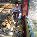 Tigers - Trecking & more chiang mai