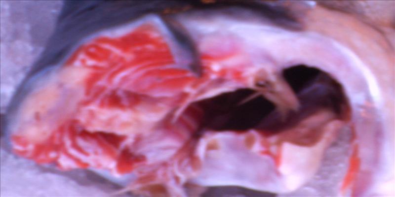 Salmon mouth