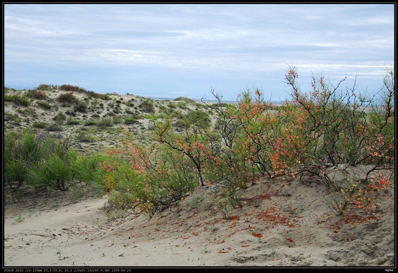 白沙山,不知名红花